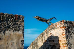 小動物が隣の建物にジャンプしている瞬間