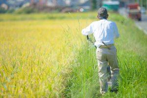 田んぼの横で重機を操作する人の背中