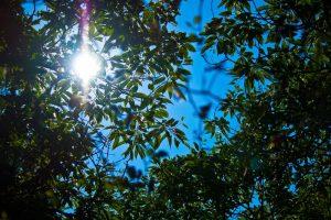 木の葉の隙間からこぼれる陽の光