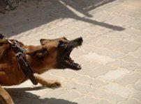 凶暴に吠える犬